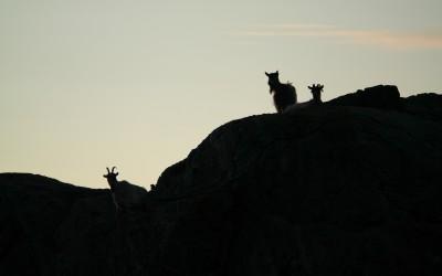 Nordiskt Open Space möte i Norge